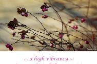 a-high-vibrancy-is-a-product-of-the-present