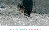 it-is-the-smallest-alterations--that-will-always-impact-on-the-larger-ones