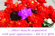 others-may-be-acquainted-with-your-appearance---but-it-is-you-who-knows-how-to-handle-it